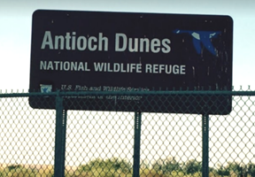 Antioch Dune
